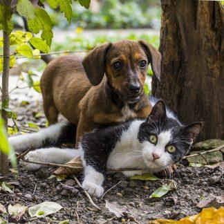 CBD Hemp Oil for Pets