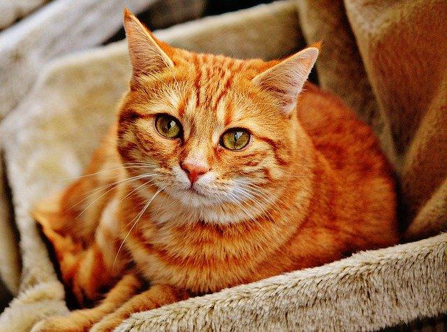 cats can take cbd